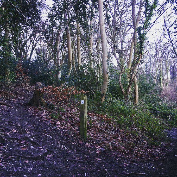 Gomm Wood trail to Tylers Green