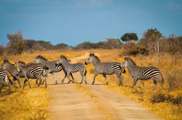 Zebra crossing (Tanzania) by Nick Powell