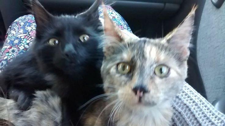 Día 26: Rutina. No siempre es la misma.. pero ellos siempre forma parte de ella. :) Visitando al veterinario.