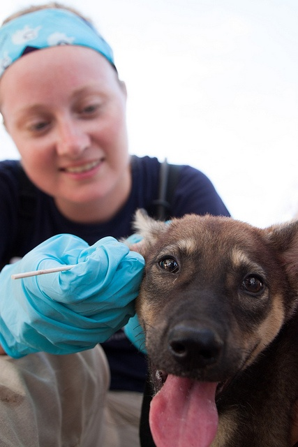 17 Best images about Veterinarians on a Mission on Pinterest ...
