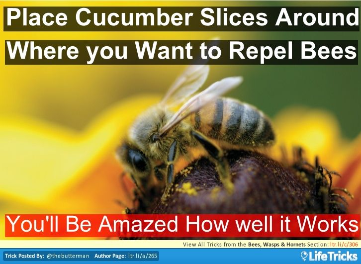 Lay cucumbers slices around your picnics or BBQs and it will keep bees away. Its amazing how well this works!