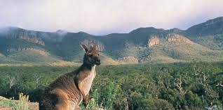 The program offers a 24 hour, fully staffed residential treatment facility in the heart of Halls Gap in regional Victoria, Australia.