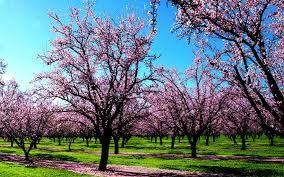 Spring Flower Trees