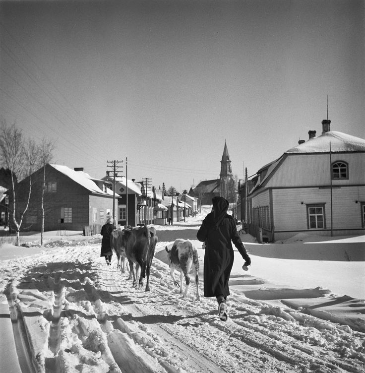 naiset-palaamassa-karjan-kanssa-kurkijoelle.jpg (3465×3543)