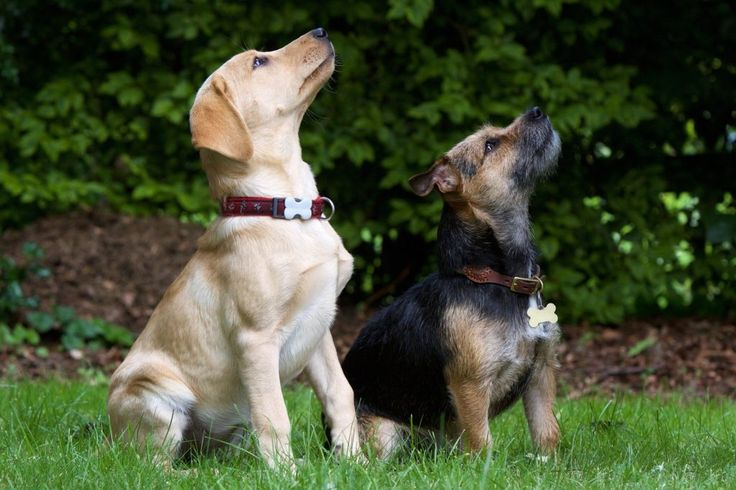 How To Train Your Dog, sitting dogs