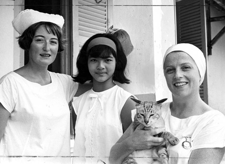 Historical cat picture tumblr! Australian Nurses in Le Loi Hospital, in Vietnam, 1967. Herald & Weekly Times Limited portrait collection. Sister Marie Townsend of Bondi, Sydney (left) and Sister Lorna Finnie of South Coogee, Sydney. With them, Cao Kim Dinh, an interpreter, and a...