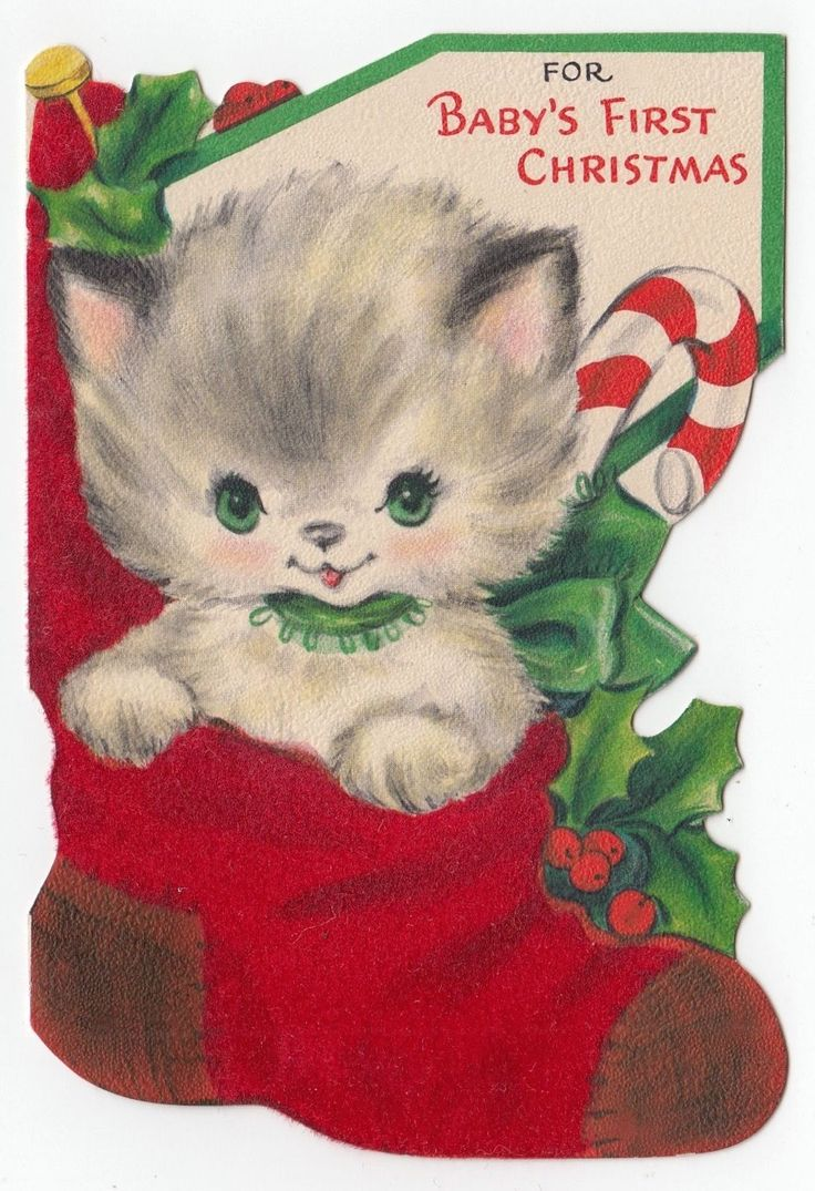 79 best kitty cats sitting in stockings boots shoes mittens