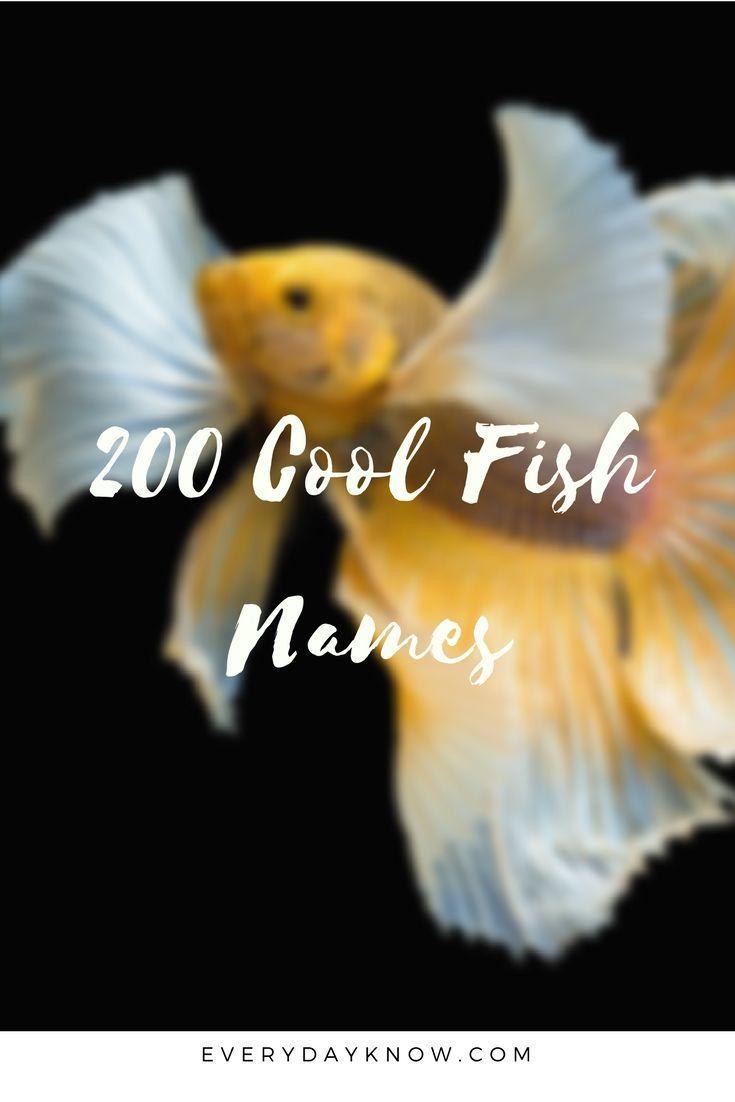 200 Cool Fish Names | pet | Fish names pet, Pet fish, Cool fish