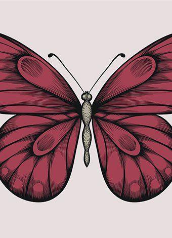 La mariposa. Poesía de Federico García Lorca.