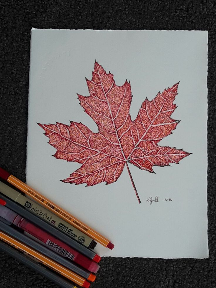 Pointillism drawing of the Canadian Maple leaf by Kristin.Ivill.Art