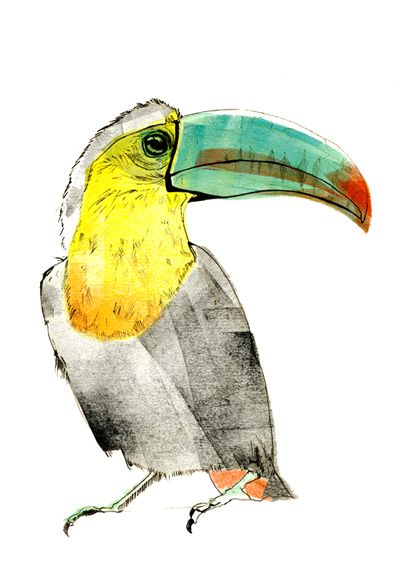 Toucan / Sophie Rae Illustration