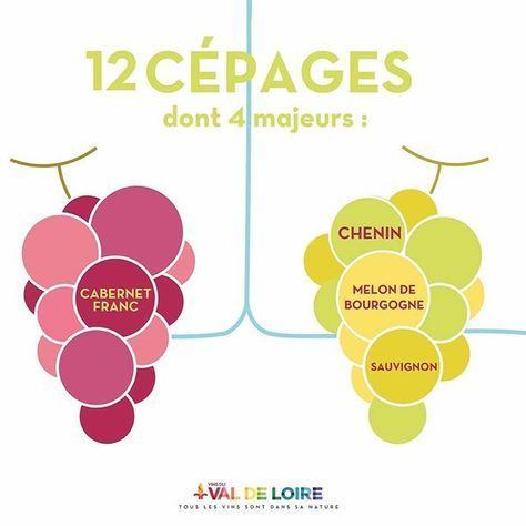 Les Vins du Val de Loire ce sont 12 cépages