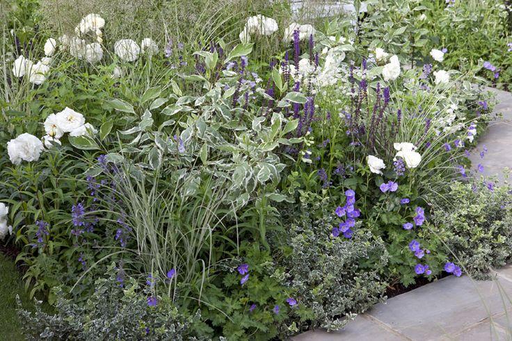 1 Witte struikroos, Rosa 'Schneewittchen'. Hoogte 90 cm, bloei juni-september, wit, heester  2 Witbonte kornoelje, Cornus alba 'Elegantissima'. Hoogte 1-3 meter, bloei mei-juni, witbont blad, heester  3 Salie, Salvia nemorosa 'Caradonna'. Hoogte 50-75 cm, bloei juni-augustus, violet, vaste plant  4 Witbonte kardinaalshoed, Euonymus fortunei 'Emerald Gaiety'. Hoogte 50 cm, witbont blad, heester  5 Ooievaarsbek, Geranium 'Rozanne'. Hoogte 20-40 cm, bloei juni-september, violet, vaste plant  6…