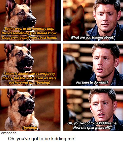 9.05 Dog Dean Afternoon Ugh this was so frustrating I soooo want to know. But does this mean he'll get to be a dog again?
