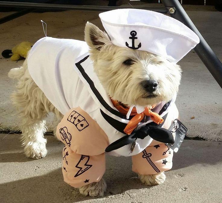680 best Dog Halloween Costumes images on Pinterest ...
