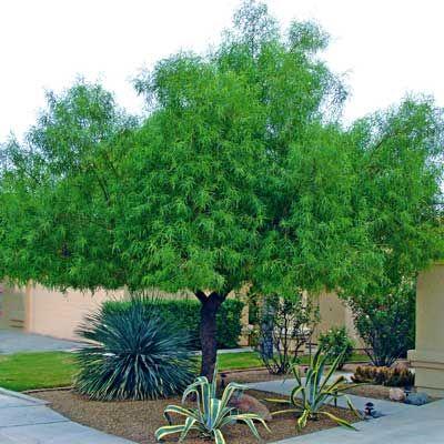 144748575498517316 likewise Arizona Desert Landscape Design Ideas likewise Edible Landscape Design likewise 507921664196682991 besides Five Privacy Landscape Design Ideas. on desert plants landscaping ideas