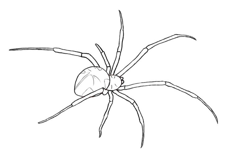 spider drawing
