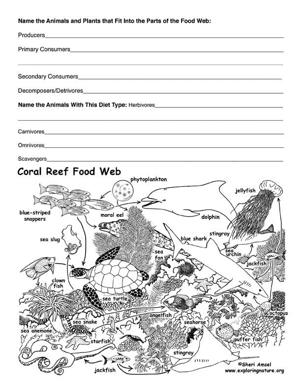 A Coral Reef Food Web exercise to engage the students and build their understanding on the food web in the ocean.
