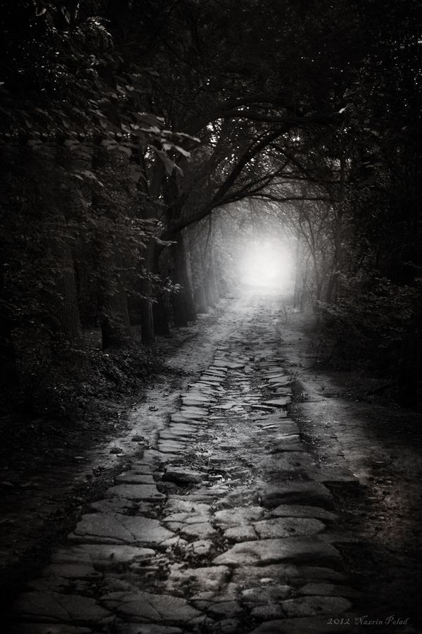 That country Road by Nazrin Polad,: The Roads, Country Roads, Dark Dreams, Polad Flowers, Dark Forests, Black White, Nazrin Polad Deviantart Com, The Dark, Dark Paradise