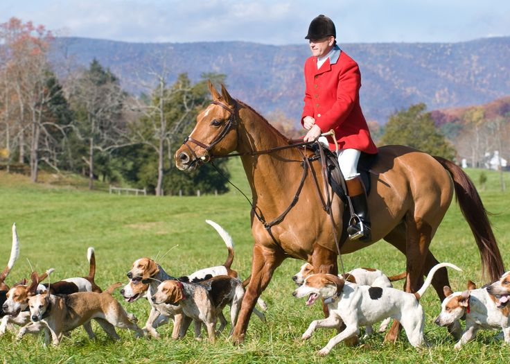 Image result for fox hunt