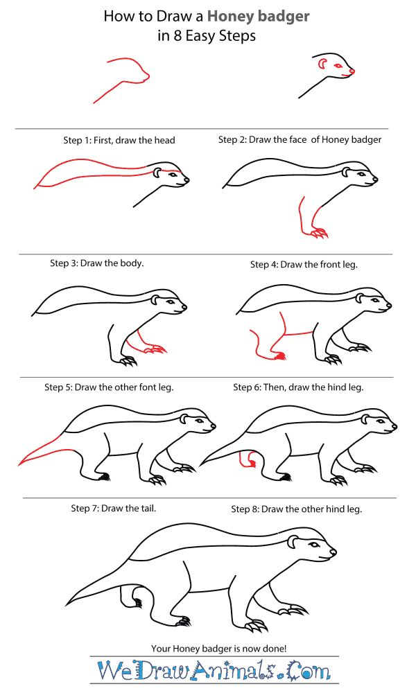 How To Draw A Honey Badger - Step-By-Step Tutorial   Honey Badger, Honey  Badger Tattoo, Harry Potter Drawings Easy