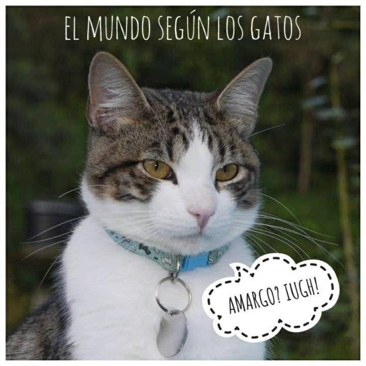 Todo Acerca De La Mejor Mascota Gatos Gatos Cosas Para Gatos Amor De Gatos