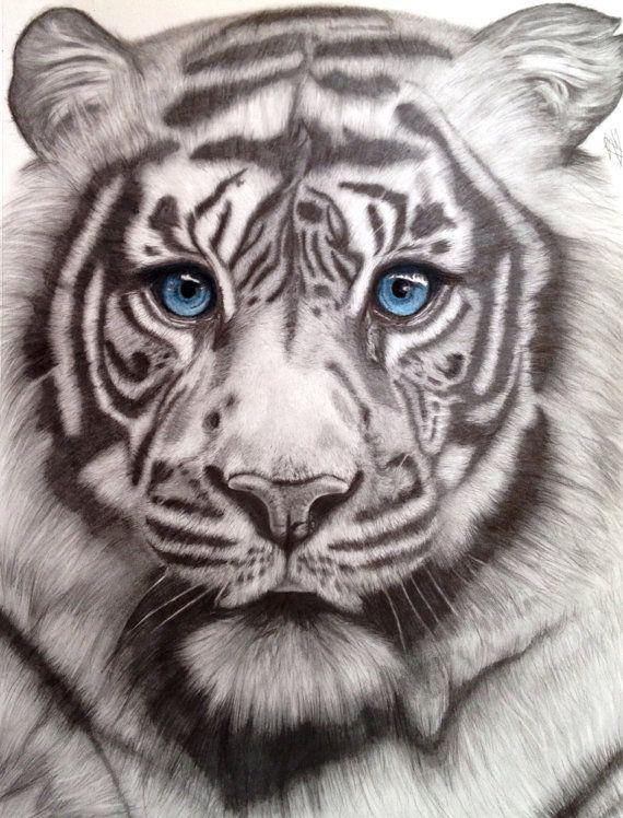 519 best tiger images on Pinterest | Dragons, Animal
