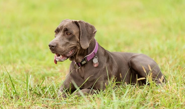 5 Things You Must Know About Shock Collars Before Buying One  ||  Whether or not to use a shock collar for dogs is one of the most hotly debated topics among dog owners. You need to know these things before using one! https://topdogtips.com/shock-collar-for-dogs/