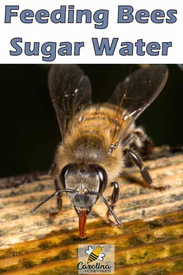 Feeding Bees Sugar Water How Why Carolina Honeybees Feeding Bees Bee Bee Keeping