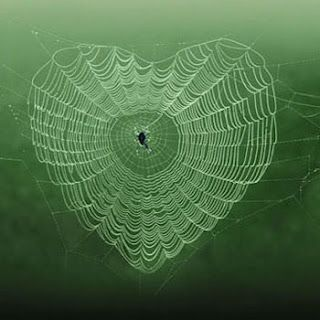 Love is in the air.. In the life of the spider..