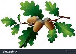 Image result for oak tree leaves