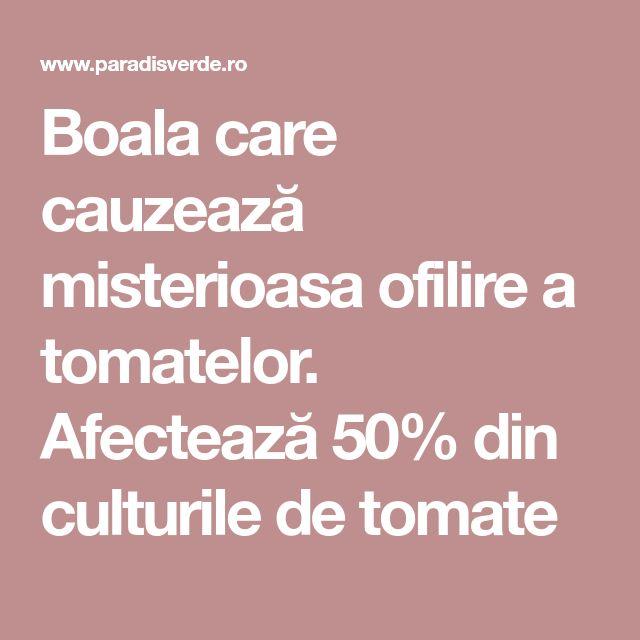 Boala care cauzează misterioasa ofilire a tomatelor. Afectează 50% din culturile de tomate
