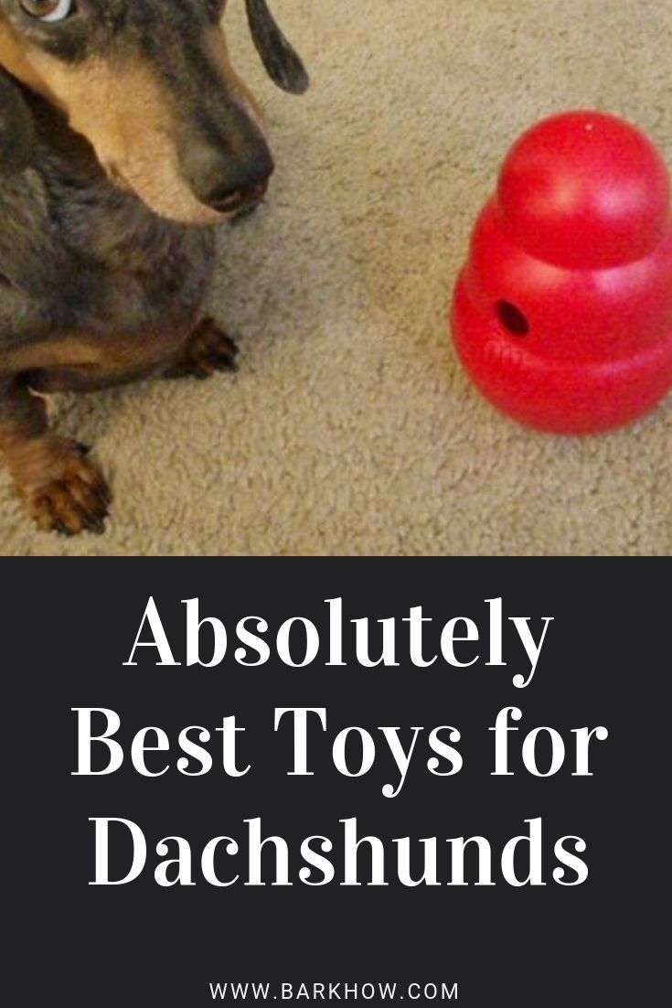 Absolutely The Best Toys For Dachshunds Toys That Cater To And