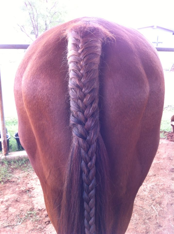 French Braid Horse Tail By Lauren O Equestrian