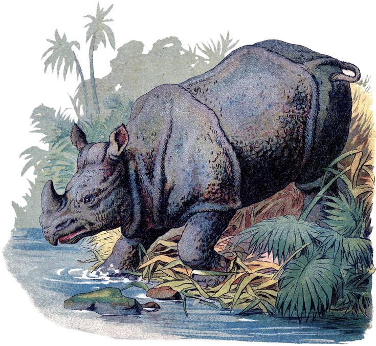 The Graphics Fairy: rhino: