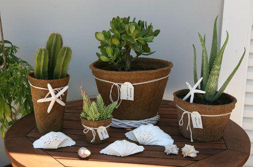 summer cocopots