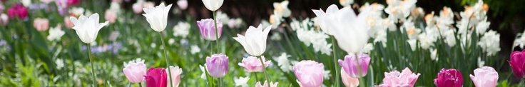 new york botanical garden/bronx