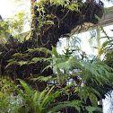 Der Botanische Garten der CAU Kiel