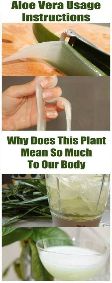 Aloe Vera Usage Instructions: Why Does This Plant Mean So Much To Our Body?