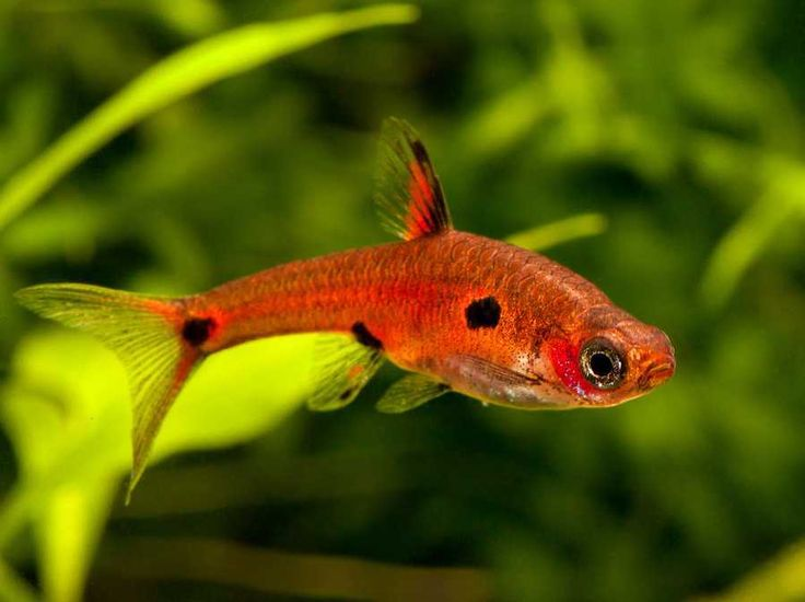 180 best images about nano fish tanks on pinterest for Small freshwater aquarium fish