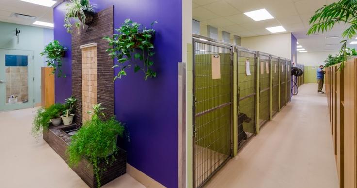Busack Pet Hospital and Pet Resort http://www.bartelsbusackpethospital.com/ Photos by Dish Design (www.dishdesign.com)