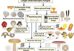 Image result for fungi graph