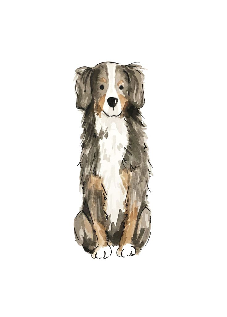 Pin By Dogs On Bernese Mountain Dog Mountain Dogs Bernese Mountain Dog Dog Print