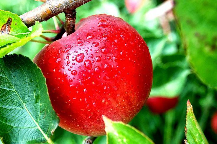 Balita (1-5 Tahun), Makanan, Sehat, Bayi, Apel, Merah
