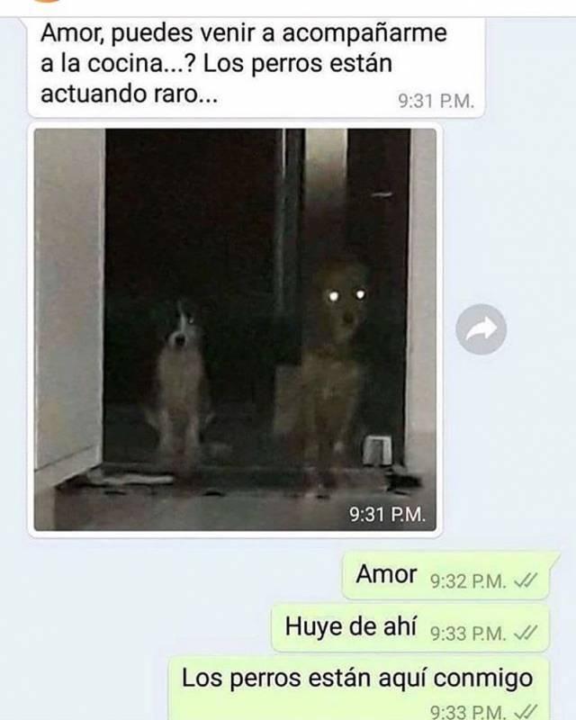 Amor Puedes Venir A Acompanarme Memes Best Memes Spanish Memes