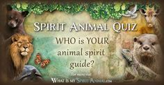 Take my Spirit Animal Quiz & connect with your animal spirit guide, today! This Spirit Animal Test can help you understand your life's purpose and path! #spiritanimalquiz #findyourspiritanimal #howtofindyourspiritanimal #spiritanimal #animals #animales #totems