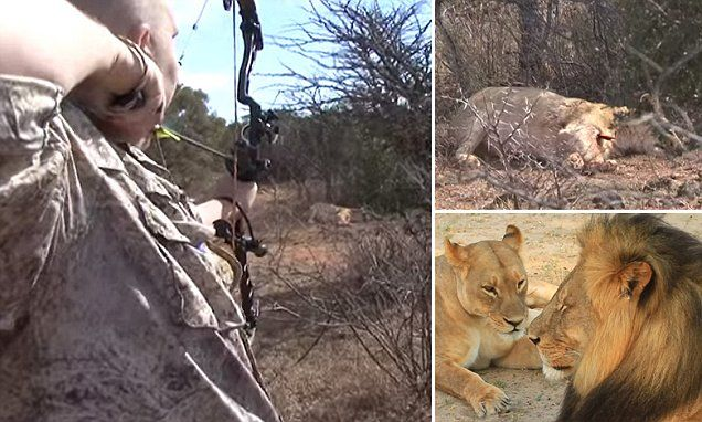 How 'bowhunters' like the dentist who shot Cecil kill their prey
