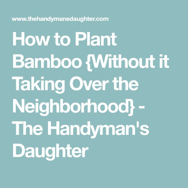 How to Plant Bamboo {Without it Taking Over the Neighborhood} - The Handyman's Daughter