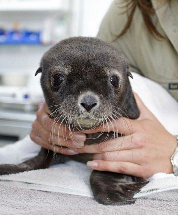 Baby Sea Lion   Inspirational   Pinterest