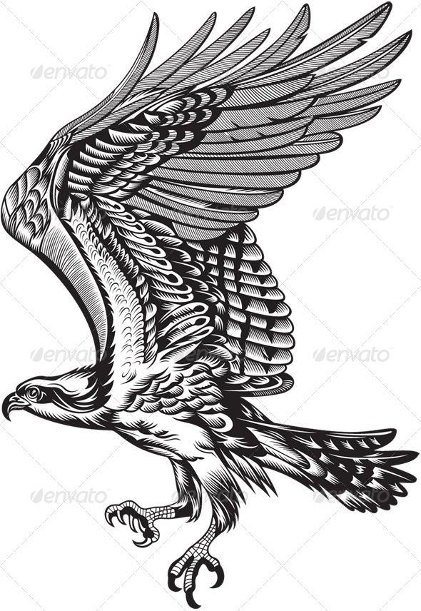 Wild Predatory Bird
